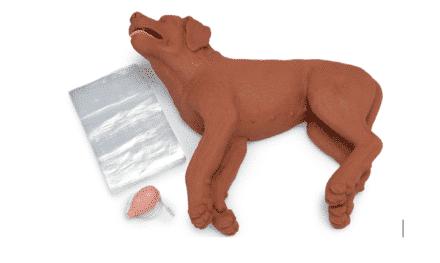 Resuscytacja u zwierząt