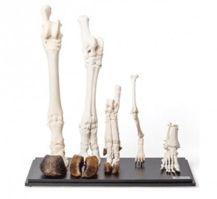 Pozostałe modele zoologiczne