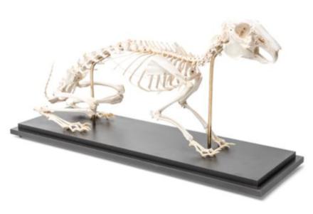 Modele małych ssaków