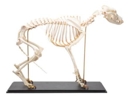 Model psa