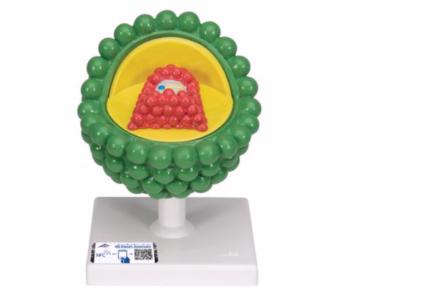 Model wirusa HIV w powiększeniu