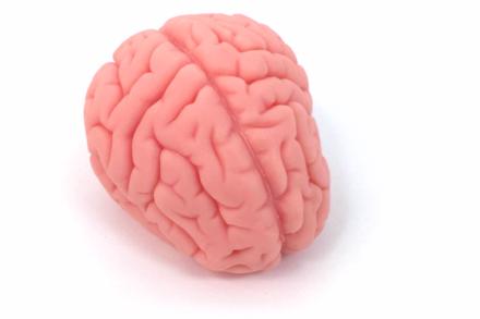 Model mózgu BIOLIKE2